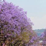 Mpumalanga-scaled-1.jpg